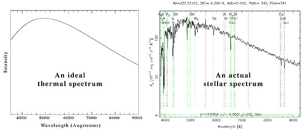 Comparing an ideal thermal spectrum to the spectrum of a real star. The ideal spectrum is a smooth curve, while the real spectrum has bumps for absorption lines and noise.